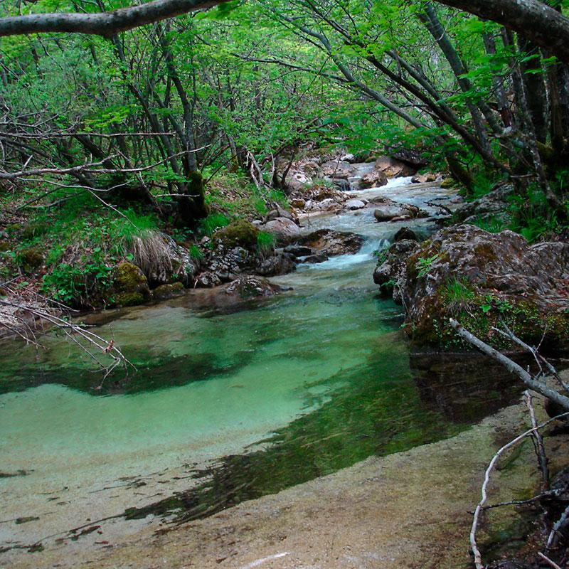 National_Park_of_Abruzzo,_Latium_and_Molise_02196